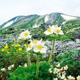 日本の国立公園の山の魅力⑲「大雪山国立公園」